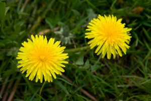 Photo From: Dandelion Salad