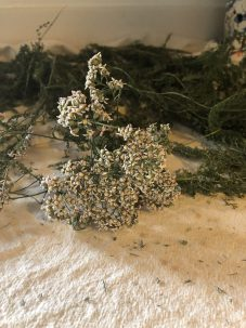 Photo From: Yarrow Hydrosol – Grown in distilled in Maui